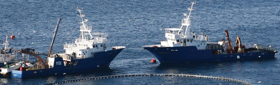 Fleet of Sardina's ships