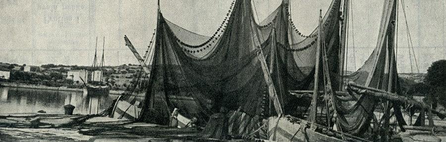 Povijest Sardine